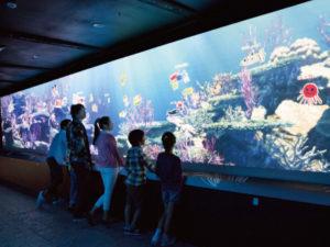 新3D水族館