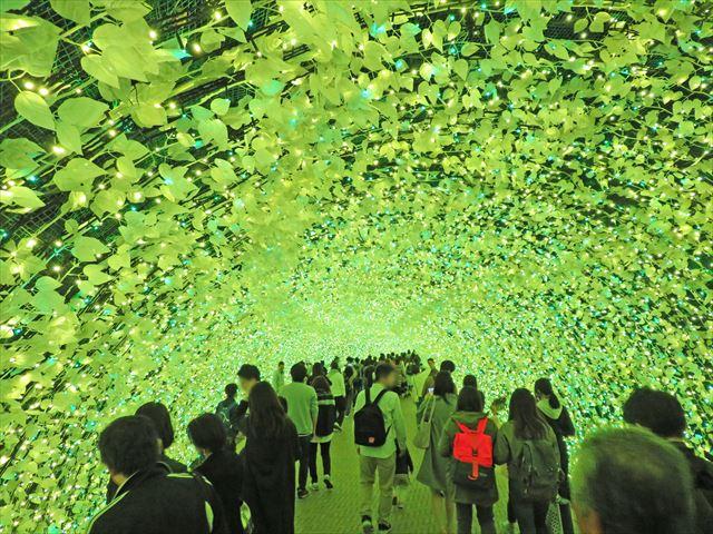 菜の花トンネル(2)