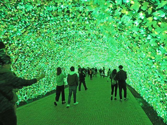 菜の花トンネル(3)