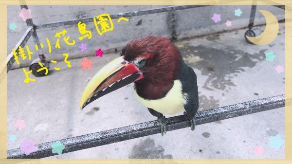 掛川花鳥園A
