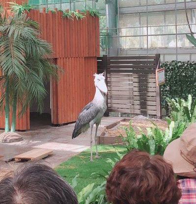 掛川花鳥園のハシビロコウ