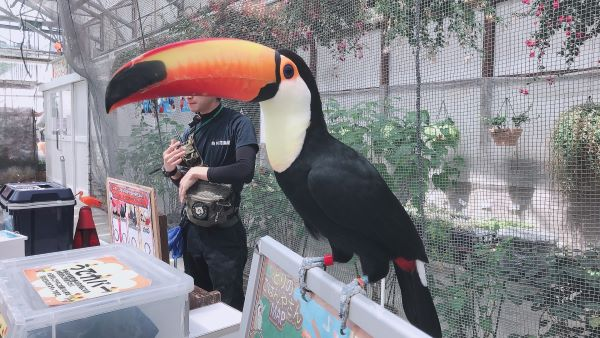 掛川花鳥園のオオハシ2