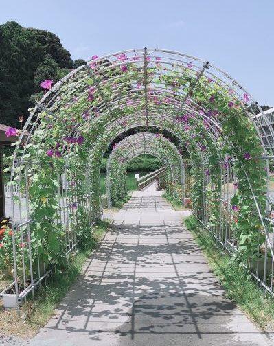 掛川花鳥園の花のトンネル